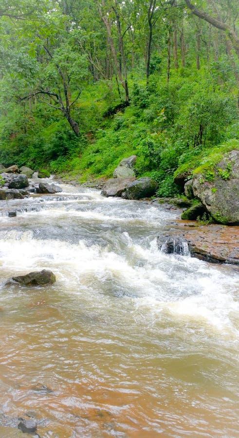Φυσική άποψη των ροών ποταμών narmada μέσω των άγρια περιοχών στοκ φωτογραφία με δικαίωμα ελεύθερης χρήσης