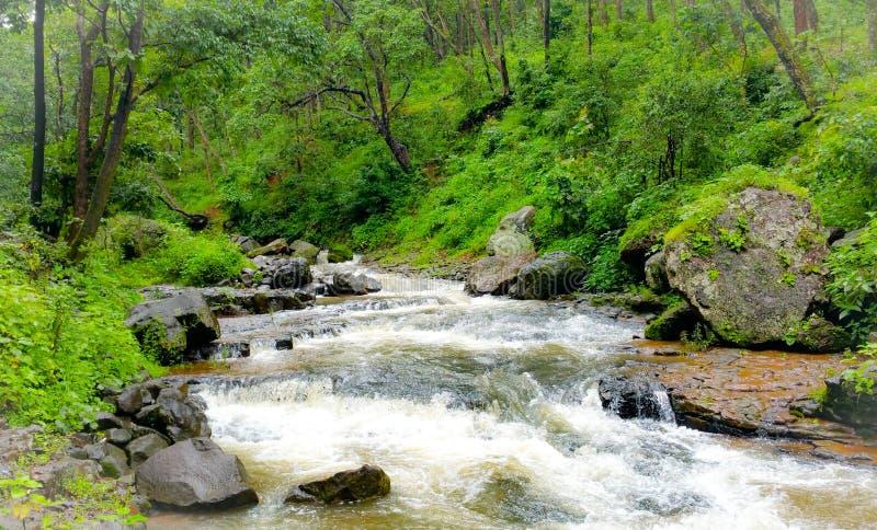 Φυσική άποψη των ροών ποταμών narmada μέσω των άγρια περιοχών στοκ εικόνα