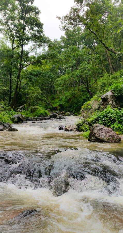 Φυσική άποψη των ροών ποταμών narmada μέσω των άγρια περιοχών στοκ φωτογραφίες