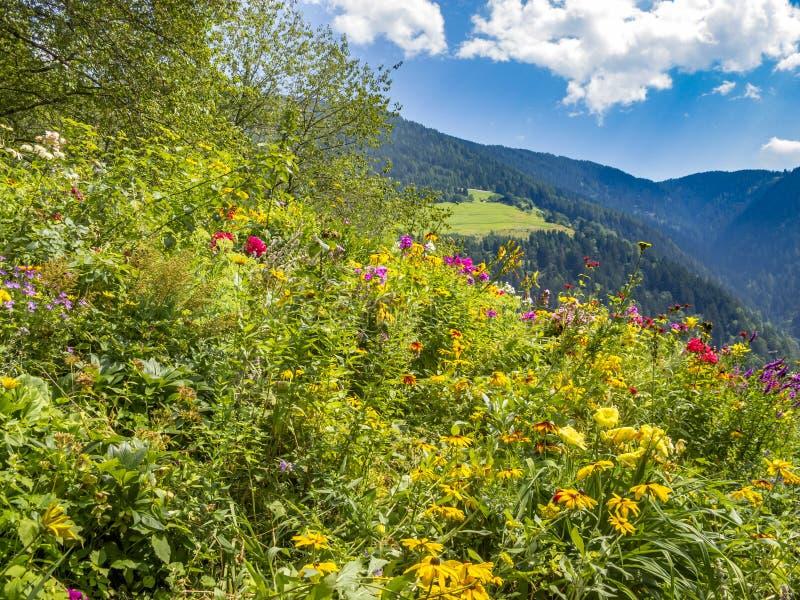 Φυσική αλπική άποψη με τα λουλούδια κήπων στο πρώτο πλάνο στοκ εικόνα