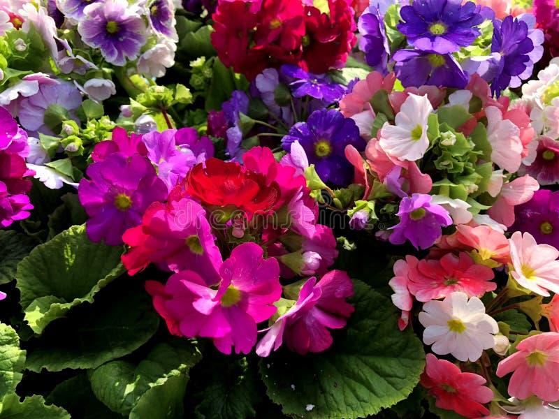 Φυσική ανθοδέσμη των όμορφων λουλουδιών στο πάρκο πόλεων στοκ εικόνες με δικαίωμα ελεύθερης χρήσης