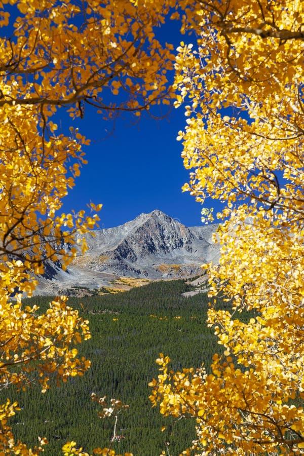 Φυσική θέα βουνού μέσω Aspens στοκ φωτογραφία