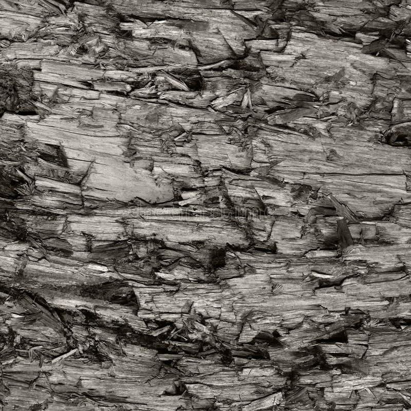 Φυσική ξεπερασμένη γκρίζα σύσταση κολοβωμάτων δέντρων περικοπών Taupe καφετιά, μεγάλο λεπτομερές χαλασμένο πληγωμένος ξύλο υποβάθ στοκ εικόνες