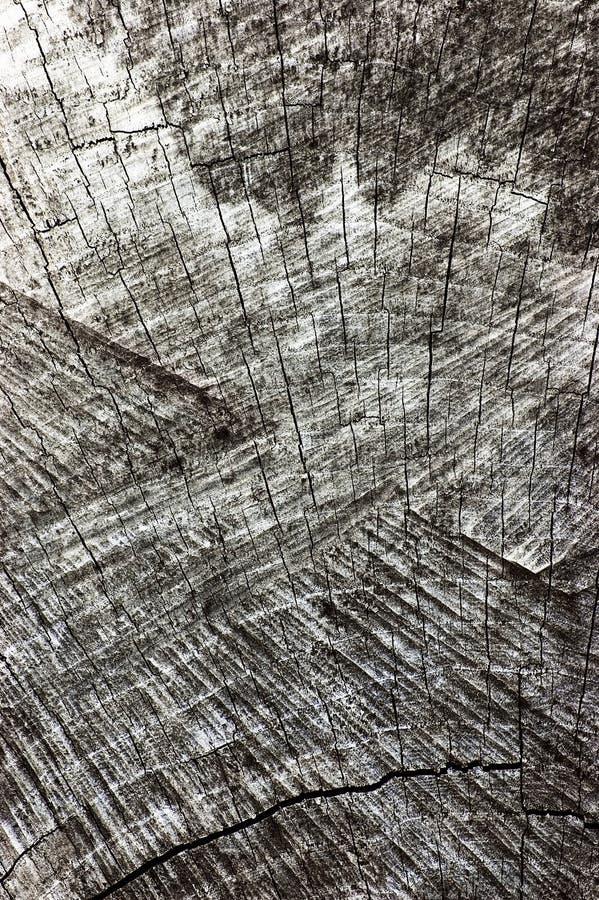 Φυσική ξεπερασμένη γκρίζα σύσταση περικοπών κολοβωμάτων δέντρων, μεγάλη λεπτομερής παλαιά ηλικίας γκρίζα κάθετη μακρο κινηματογρά στοκ φωτογραφία με δικαίωμα ελεύθερης χρήσης