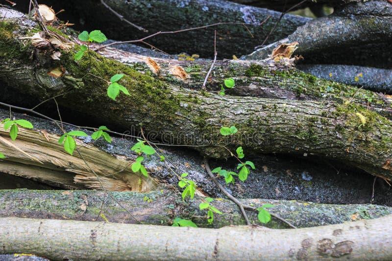 Φυσική ξύλινη σύσταση στοκ εικόνες με δικαίωμα ελεύθερης χρήσης