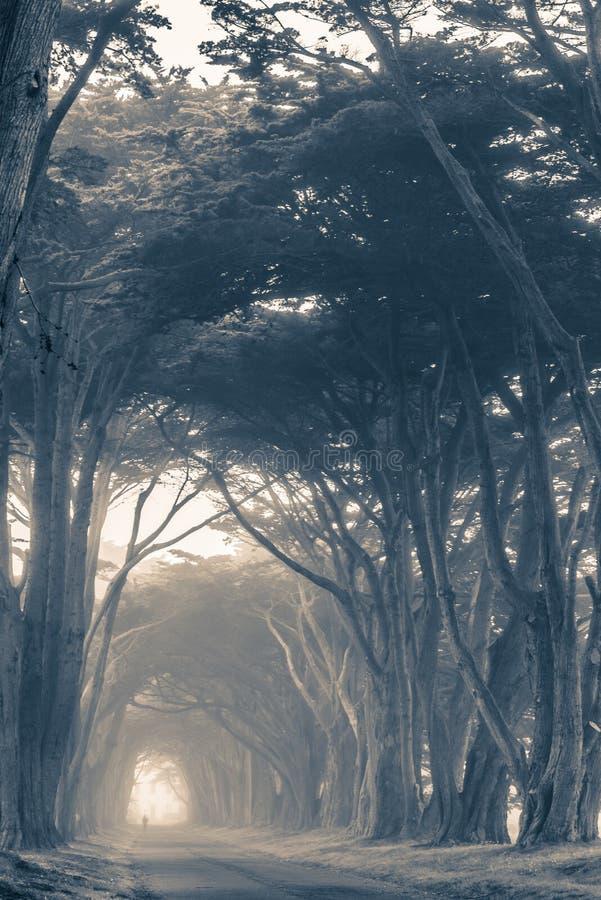 Φυσική ομιχλώδης αλέα δέντρων στοκ εικόνες