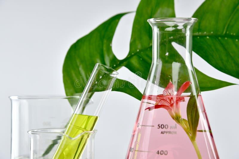 Φυσική οργανική εξαγωγή και πράσινα βοτανικά φύλλα, λύση ουσίας αρώματος λουλουδιών στοκ εικόνες