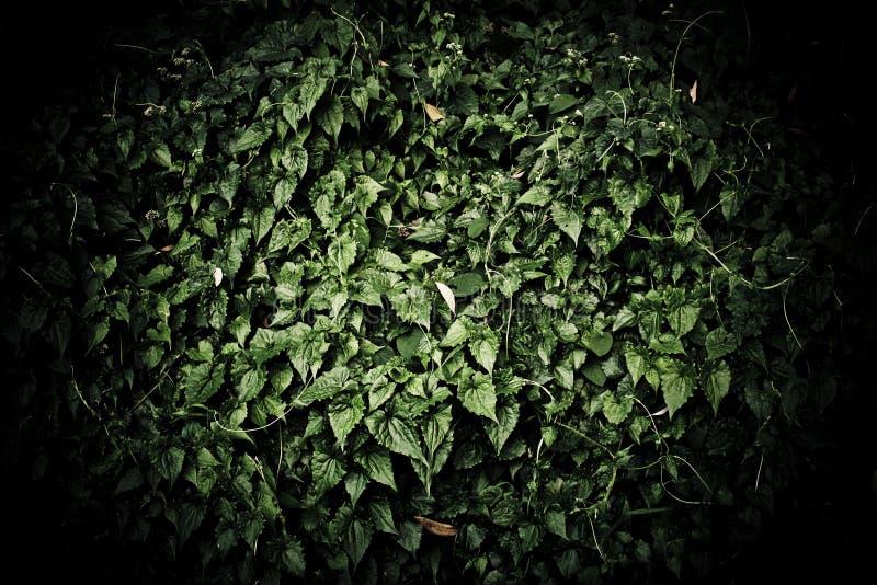 Φυσική σκούρο πράσινο ταπετσαρία στοκ φωτογραφία