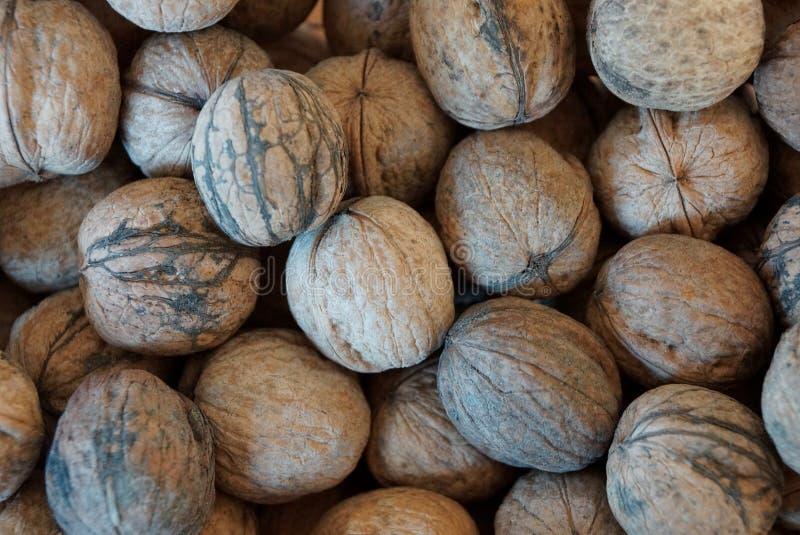 Φυσική σύσταση ξύλων καρυδιάς εγκαταστάσεων γκρίζα ξηρά σε έναν σωρό στοκ φωτογραφίες με δικαίωμα ελεύθερης χρήσης