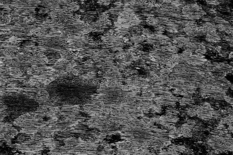 φυσική σύσταση φλοιών ανασκόπησης στοκ φωτογραφίες