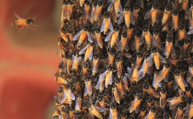 Φυσική φωλιά μελισσών μελιού στοκ εικόνα με δικαίωμα ελεύθερης χρήσης