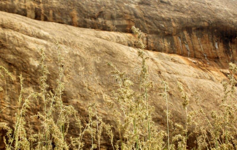 Φυσικοί βράχοι χλόης και λόφων τοπίων τροπικοί δασικοί στοκ εικόνα