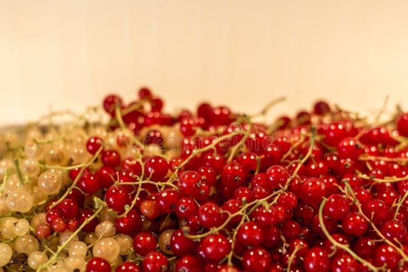 Φυσικού υποβάθρου μούρων κόκκινος άσπρος σταφίδων φρούτων βιο οργανικός μακρο στενός επάνω της Γερμανίας προϊόντων κατωφλιών υγιή στοκ εικόνες με δικαίωμα ελεύθερης χρήσης