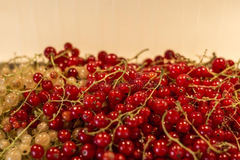 Φυσικού υποβάθρου μούρων κόκκινος άσπρος σταφίδων φρούτων βιο οργανικός μακρο στενός επάνω της Γερμανίας προϊόντων κατωφλιών υγιή στοκ εικόνες