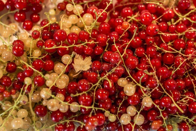 Φυσικού υποβάθρου μούρων κόκκινος άσπρος σταφίδων φρούτων βιο οργανικός μακρο στενός επάνω της Γερμανίας προϊόντων κατωφλιών υγιή στοκ φωτογραφίες