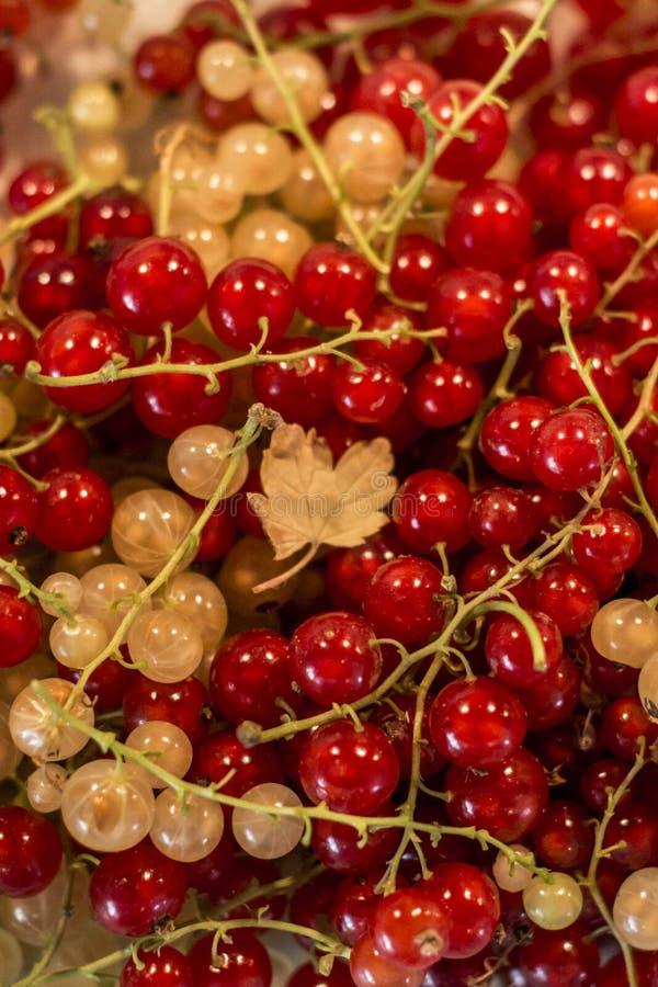 Φυσικού υποβάθρου μούρων κόκκινος άσπρος σταφίδων φρούτων βιο οργανικός μακρο στενός επάνω της Γερμανίας προϊόντων κατωφλιών υγιή στοκ φωτογραφίες με δικαίωμα ελεύθερης χρήσης