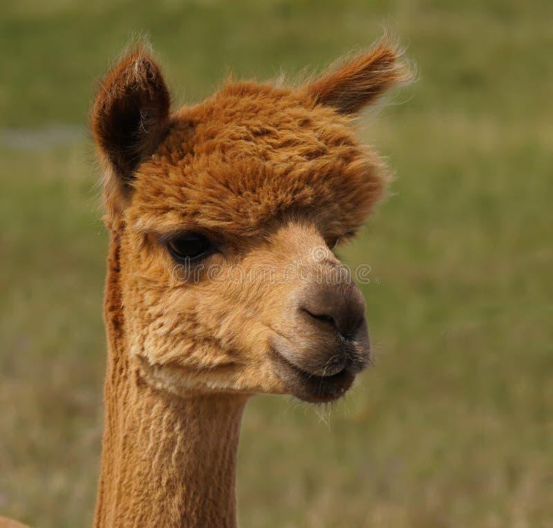 Φυσικός γεννημένος Redhead στοκ φωτογραφίες με δικαίωμα ελεύθερης χρήσης