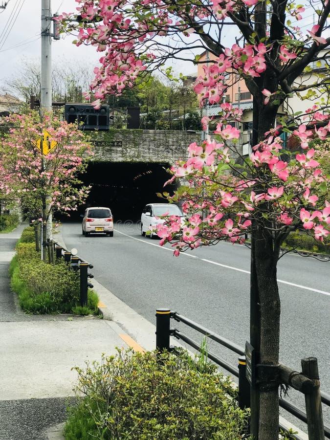 Φυσικός δρόμος ομορφιάς της Ιαπωνίας στοκ φωτογραφία με δικαίωμα ελεύθερης χρήσης