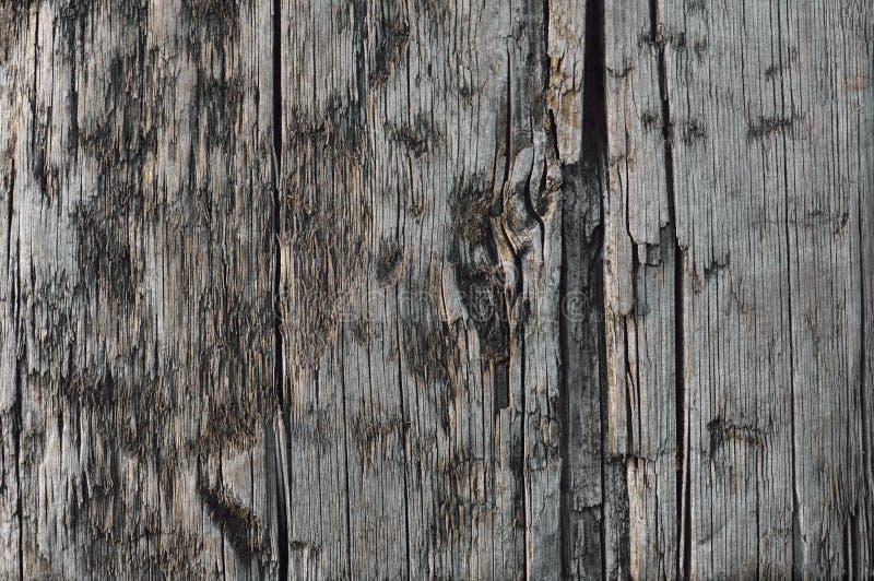 Φυσικός ξεπερασμένος γκρίζος ξύλινος πίνακας της Tan Taupe, ραγισμένη τραχιά ξύλινη σύσταση σεπιών περικοπών, μεγάλη λεπτομερής π στοκ εικόνες με δικαίωμα ελεύθερης χρήσης