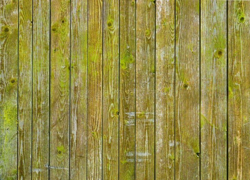Φυσικός ξύλινος τοίχος σιταποθηκών που καλύπτεται με το πράσινη βρύο ή τη λειχήνα στοκ εικόνες