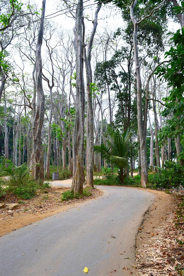 Φυσικός συγκεκριμένος δρόμος ασφάλτου μέσω των ψηλών δέντρων Mohua θάλασσας - νησί του Neil, Andaman, Ινδία στοκ φωτογραφίες