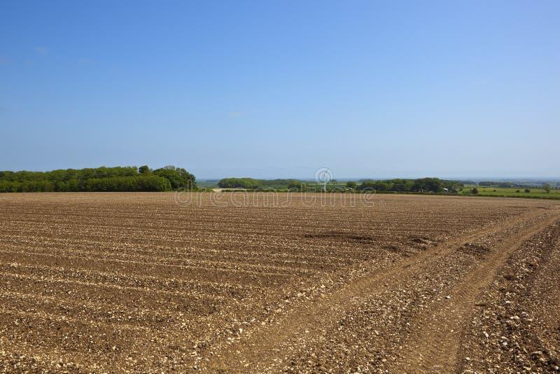 Φυσικός τομέας πατατών στοκ εικόνες