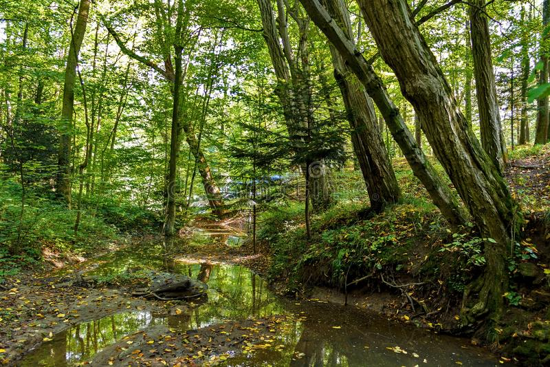 Φυσικός των ελών στο εθνικό πάρκο Πολύβλαστο πράσινο έλος στοκ εικόνα με δικαίωμα ελεύθερης χρήσης