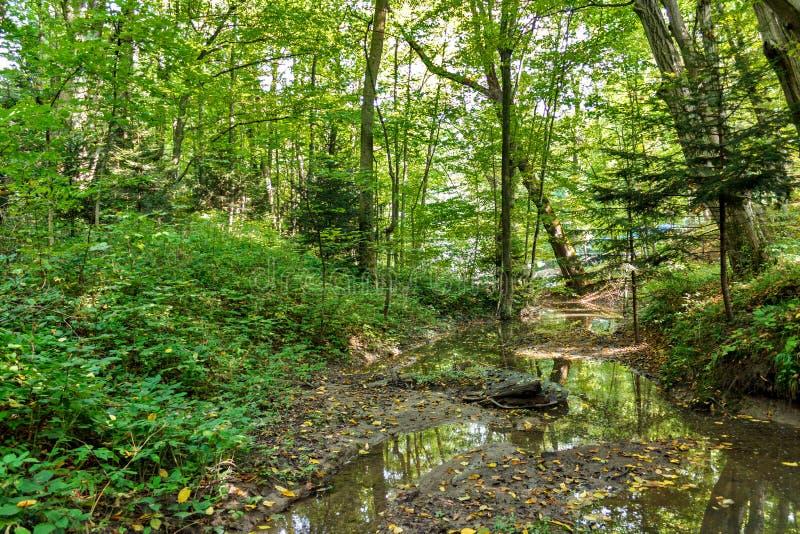 Φυσικός των ελών στο εθνικό πάρκο Πολύβλαστο πράσινο έλος στοκ φωτογραφίες