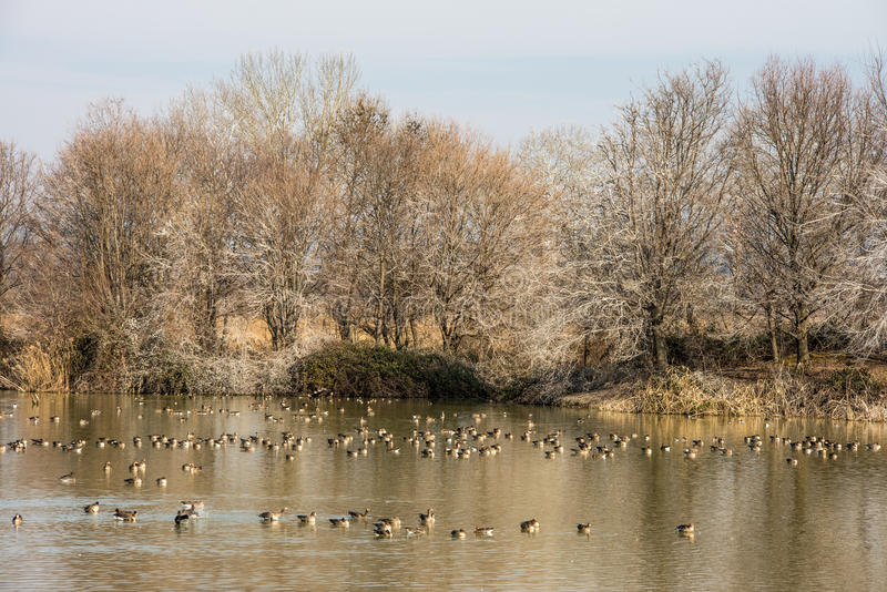 Φυσικός υγρότοπος landsape της επιφύλαξης φύσης των εκβολών ποταμού Isonzo στοκ φωτογραφία με δικαίωμα ελεύθερης χρήσης