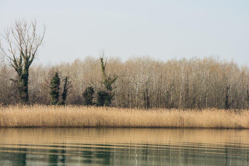 Φυσικός υγρότοπος landsape της επιφύλαξης φύσης των εκβολών ποταμού Isonzo στοκ εικόνες