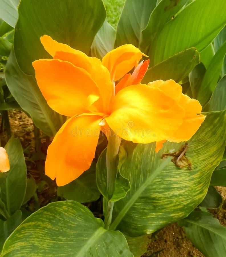 Φυσικό άγριο λουλούδι στον κήπο στοκ εικόνες με δικαίωμα ελεύθερης χρήσης