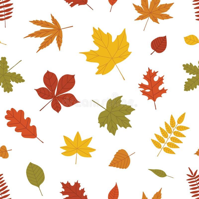 Φυσικό άνευ ραφής σχέδιο με πεσμένα τα φθινόπωρο φύλλα των δασικών δέντρων στο άσπρο υπόβαθρο Φωτεινός χρωματισμένος βοτανικός απεικόνιση αποθεμάτων