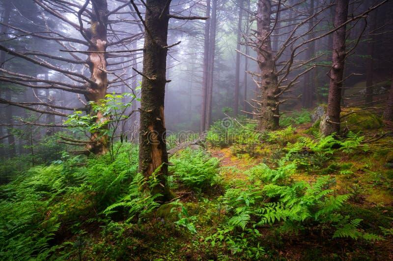 Φυσικό δάσος που το της όξινης απορροής τοπικό LAN φύσης της βόρειας Καρολίνας ιχνών στοκ φωτογραφίες