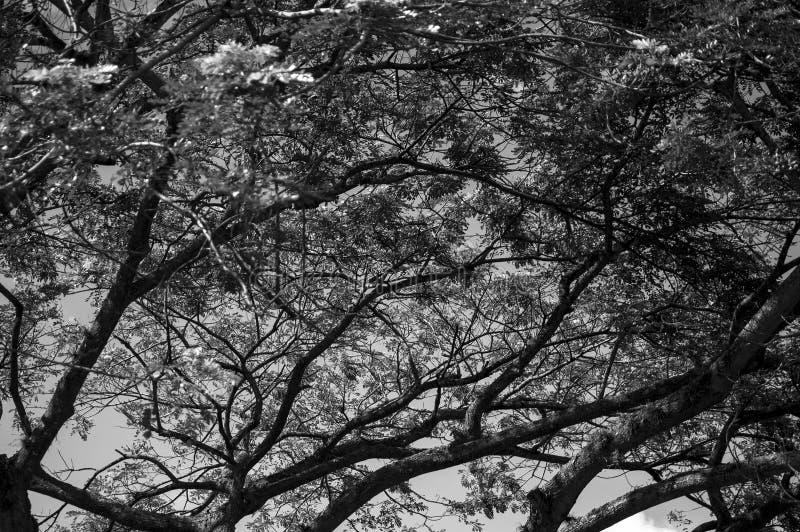 Φυσικό δέντρο - Arbol φυσικό στοκ εικόνες