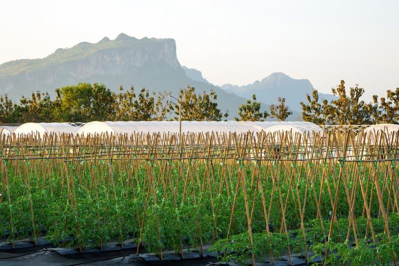 Φυσικό δάσος υποβάθρου αγρονομίας αγροτικών τομέων στοκ φωτογραφία με δικαίωμα ελεύθερης χρήσης
