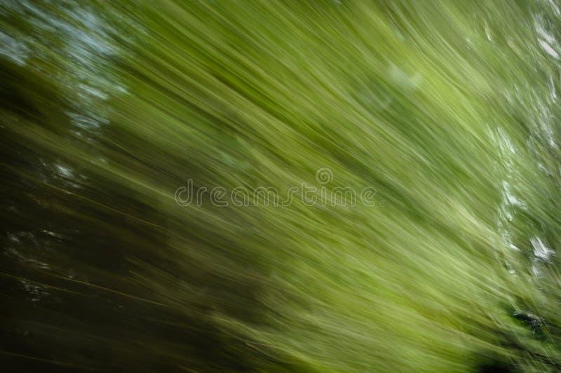 φυσικό δέντρο κινήσεων θα&m στοκ εικόνες με δικαίωμα ελεύθερης χρήσης