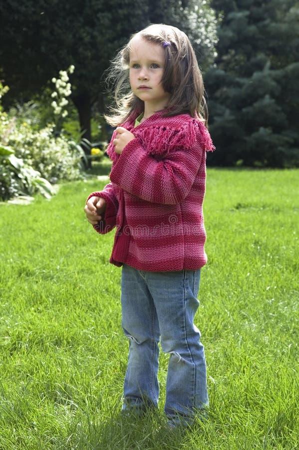 φυσικό θερινό γλυκό κορι στοκ εικόνες