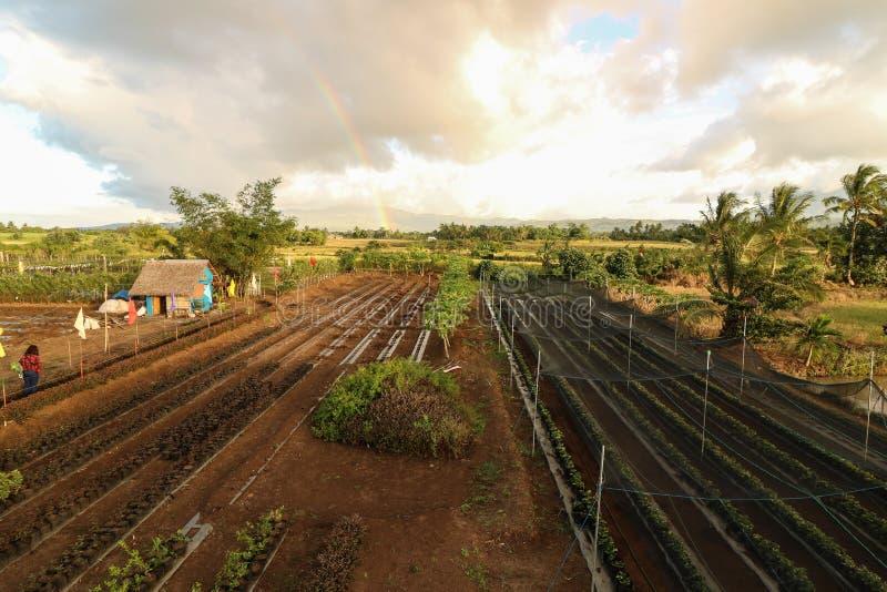 Φυσικό και όμορφο αγρόκτημα στις Φιλιππίνες στοκ φωτογραφίες