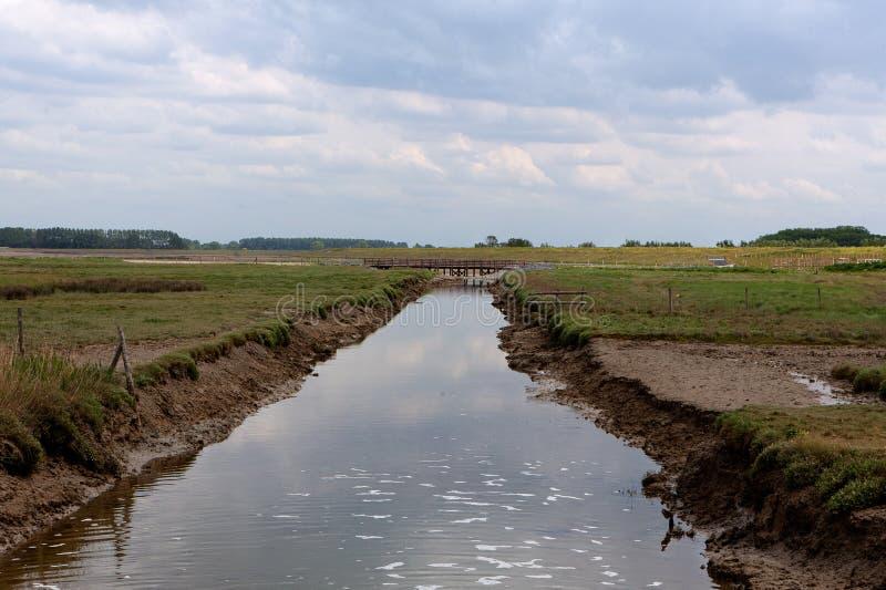 Φυσικό καταφύγιο, Zwin, Bruges, Sluis, Βέλγιο, Κάτω Χώρες στοκ φωτογραφία