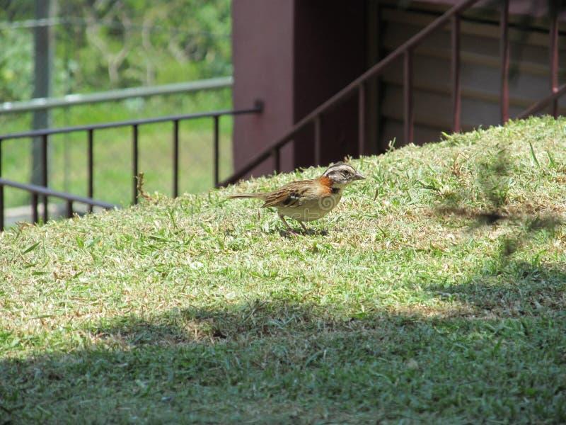 Φυσικό πουλί, ελεύθερη ζωή, ηλιόλουστη ημέρα, καθαρός αέρας, ευτυχία στοκ φωτογραφία με δικαίωμα ελεύθερης χρήσης