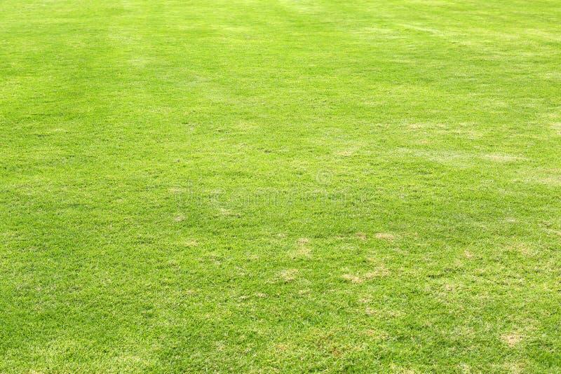 Φυσικό πράσινο τακτοποιημένο υπόβαθρο τομέων χλόης για τον αθλητισμό στοκ φωτογραφία