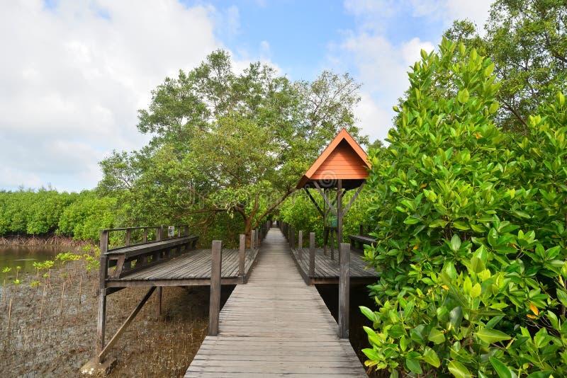 Φυσικό σημείο στο δάσος μαγγροβίων στοκ φωτογραφίες με δικαίωμα ελεύθερης χρήσης