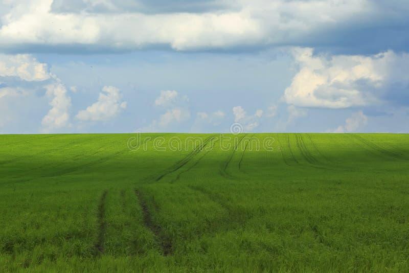 φυσικό σκηνικό του μπλε ουρανού και των πράσινων τομέων που καλύπτονται με τη χλόη στοκ εικόνα με δικαίωμα ελεύθερης χρήσης