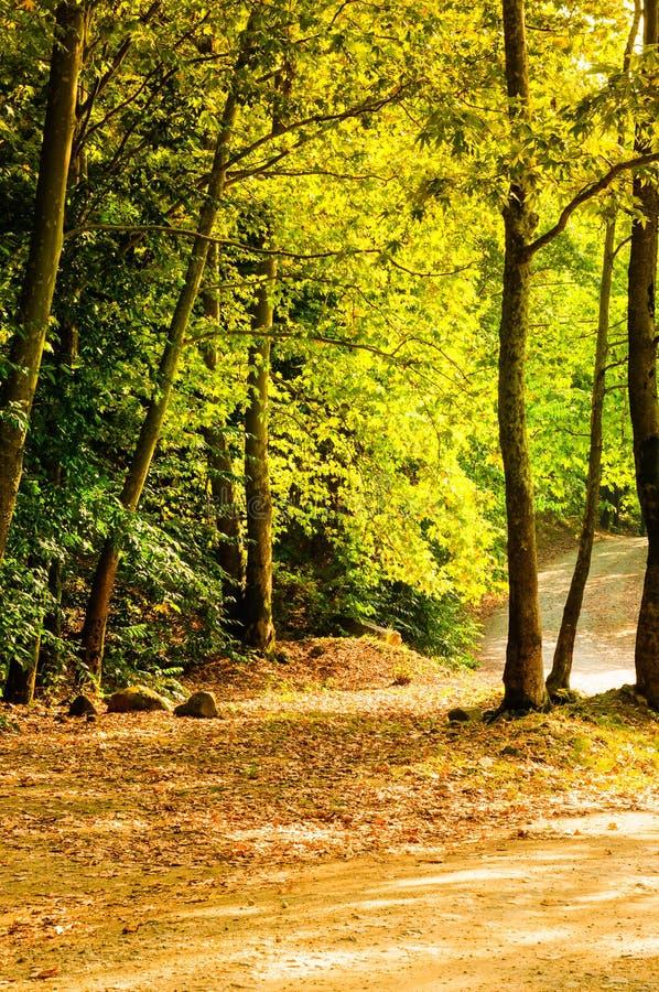 Φυσικό τοπίο θερινών ξύλων στοκ φωτογραφία με δικαίωμα ελεύθερης χρήσης