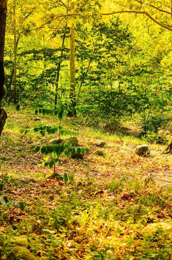Φυσικό τοπίο θερινών ξύλων στοκ εικόνες με δικαίωμα ελεύθερης χρήσης