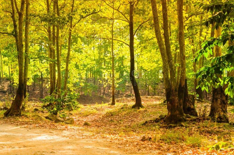 Φυσικό τοπίο θερινών ξύλων στοκ εικόνα