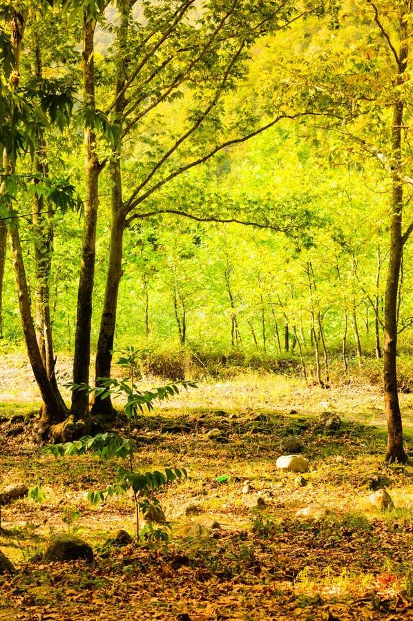 Φυσικό τοπίο θερινών ξύλων στοκ φωτογραφία