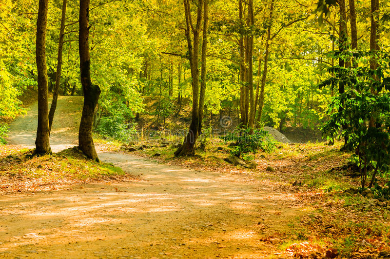 Φυσικό τοπίο θερινών ξύλων στοκ εικόνα με δικαίωμα ελεύθερης χρήσης