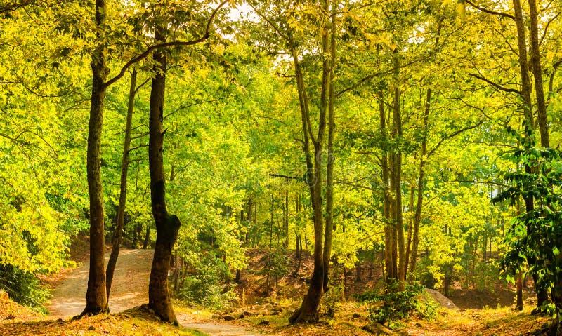 Φυσικό τοπίο θερινών ξύλων στοκ φωτογραφίες