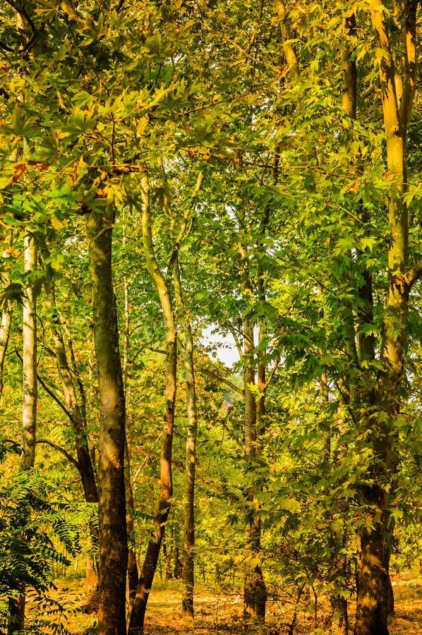 Φυσικό τοπίο θερινών ξύλων στοκ εικόνες